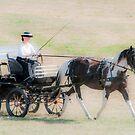 Pony & Carriage Strutting Their Stuff by Daphne Eze