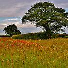 North Norfolk Field by Neville Hawkins