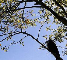 Bird Silhouette  by sarahgarnham
