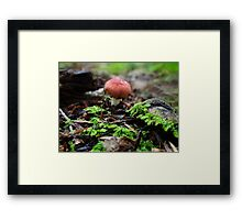Just popping in to say hi! Framed Print