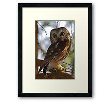 Northern Saw-whet Owl Framed Print
