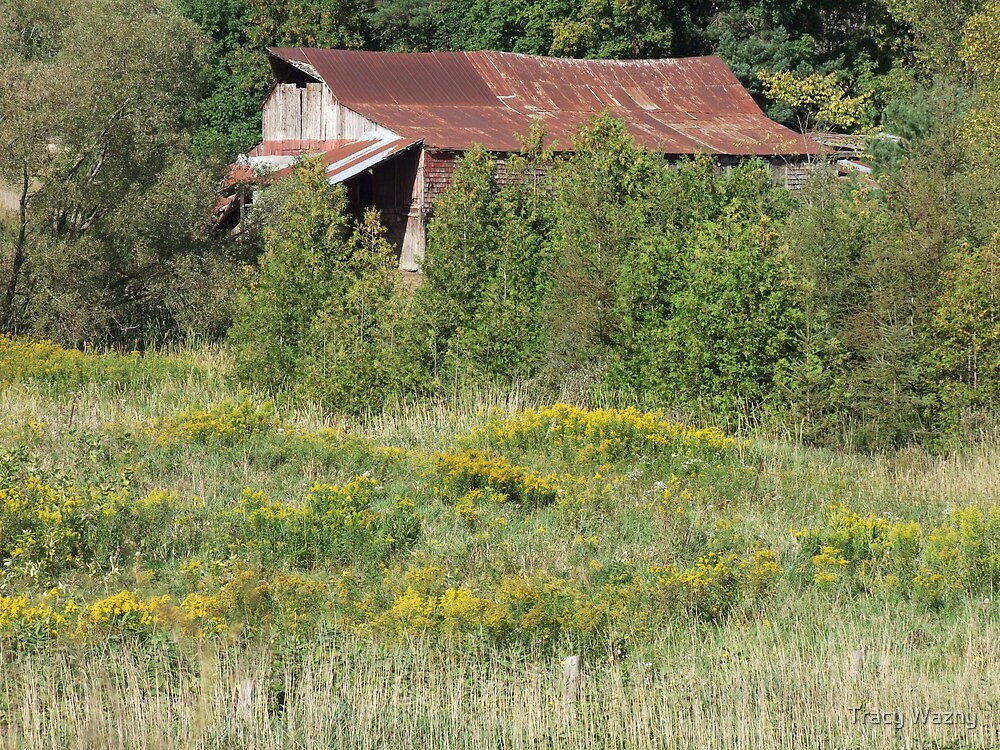 Rusty Roof and Wildflowers by Tracy Wazny