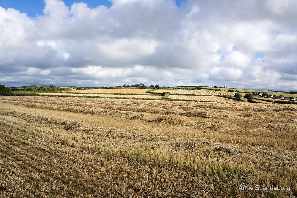 cut hay by Anne Scantlebury