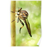'Robberfly' Poster