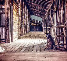 Woolshed Calendar 4 by Candice O'Neill