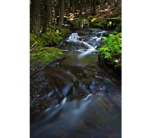 Deep in the Forrest Photographic Print