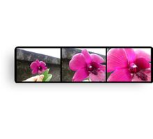 ORCHID PANORAMA FROM UBUD 02 Canvas Print