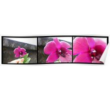 ORCHID PANORAMA FROM UBUD 02 Poster