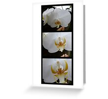ORCHID PANORAMA FROM UBUD 03 Greeting Card