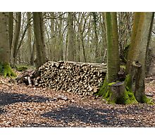 Logs for Charcoal Burning Photographic Print
