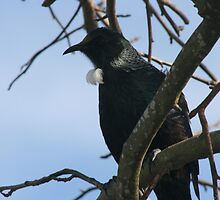 Tui time by louise linskill