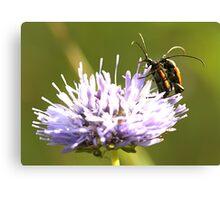 Beetles Canvas Print
