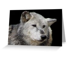 Grey Wolf Close-Up (Canis lupus) Greeting Card