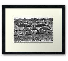 Seals on Blakeney Point Framed Print