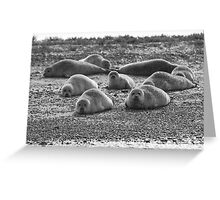 Seals on Blakeney Point Greeting Card