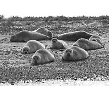 Seals on Blakeney Point Photographic Print