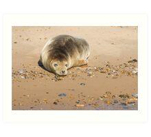 Seal Snoozing on Blakeney Point Art Print