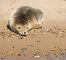 Seal Snoozing on Blakeney Point by Mark Ramsell
