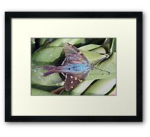 Long Tailed Skipper Butterfly on a Leaf Framed Print
