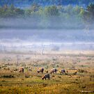 Grazing in the Morning Mist by Mikell Herrick