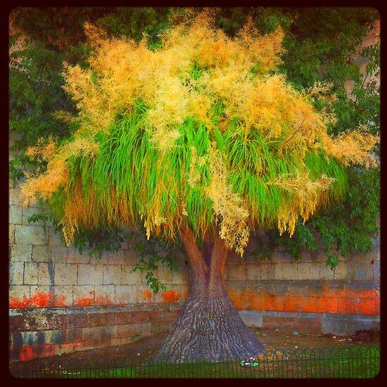 lovely tree  by terezadelpilar~ art & architecture
