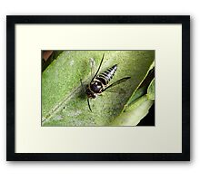 Bee on an Orange Tree Leaf Framed Print