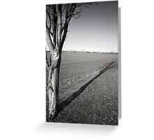 Silver Birch (Purwell Fields - Hitchin, Hertfordshire) Greeting Card