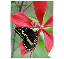Butterfly Dining Poster