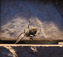 Webspinner 1 by Durandal7