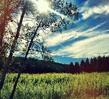 Upstate Field & white birch  by BrittneyMarie83