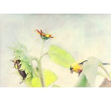 A day in the life of a goldfinch Photographic Print