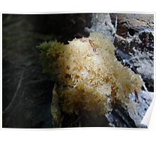 Sponge Bob fungi Poster