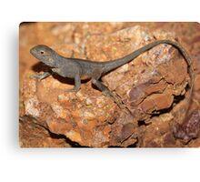 Ctenophorus tjantjalka_Coober Pedy area_SA Canvas Print