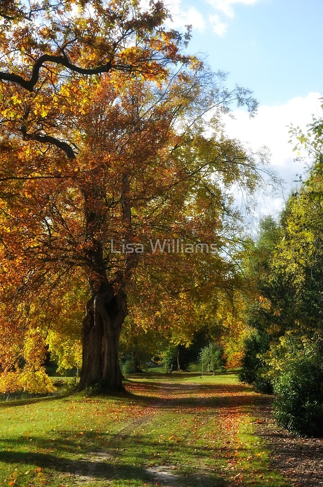 Autumn Colours by Lisa Williams