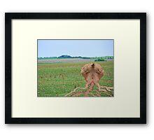 Punctuated Evolution  Framed Print
