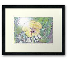 Nasturtium in sunlight Framed Print