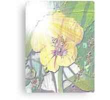 Sunlight on nasturtium Canvas Print