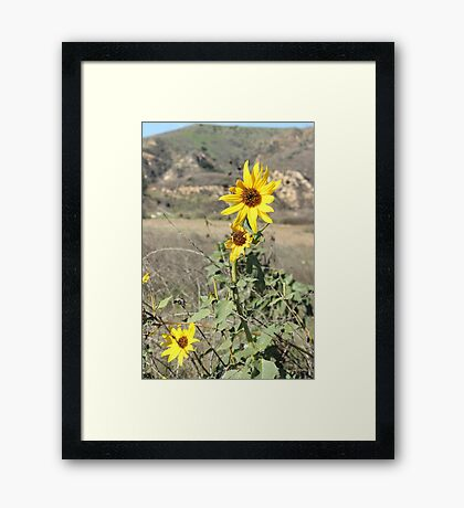 Beauty  within the beast Framed Print