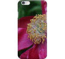 Sidelong Glance iPhone Case/Skin