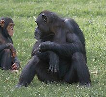 Gorilla and baby by Mira Fertin