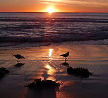 Dee Why Sunrise by Paula Couper