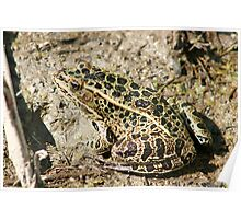 Frog in Mud Poster