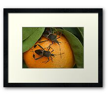 Two Leaf Footed Bugs on an Orange Framed Print