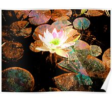 Water Lily Colours Poster