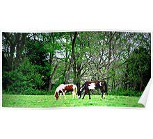 Horses Graze Poster