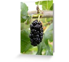 The Mulberry Greeting Card