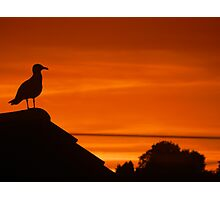 Seagull silhoutted with a burnt orange sunset Photographic Print