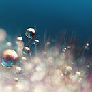 Sparkles & Drops by Sharon Johnstone