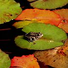 Frog Launching Pads by Larry Trupp