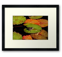 Frog Launching Pads Framed Print